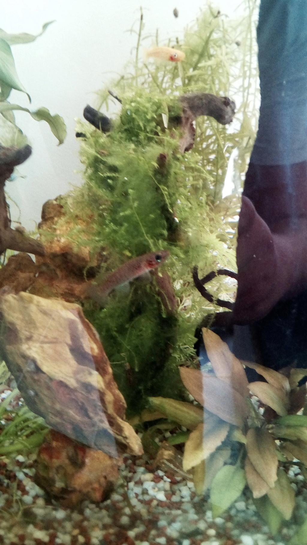 nano aquarium killi cap lopez - Page 4 Img_2310