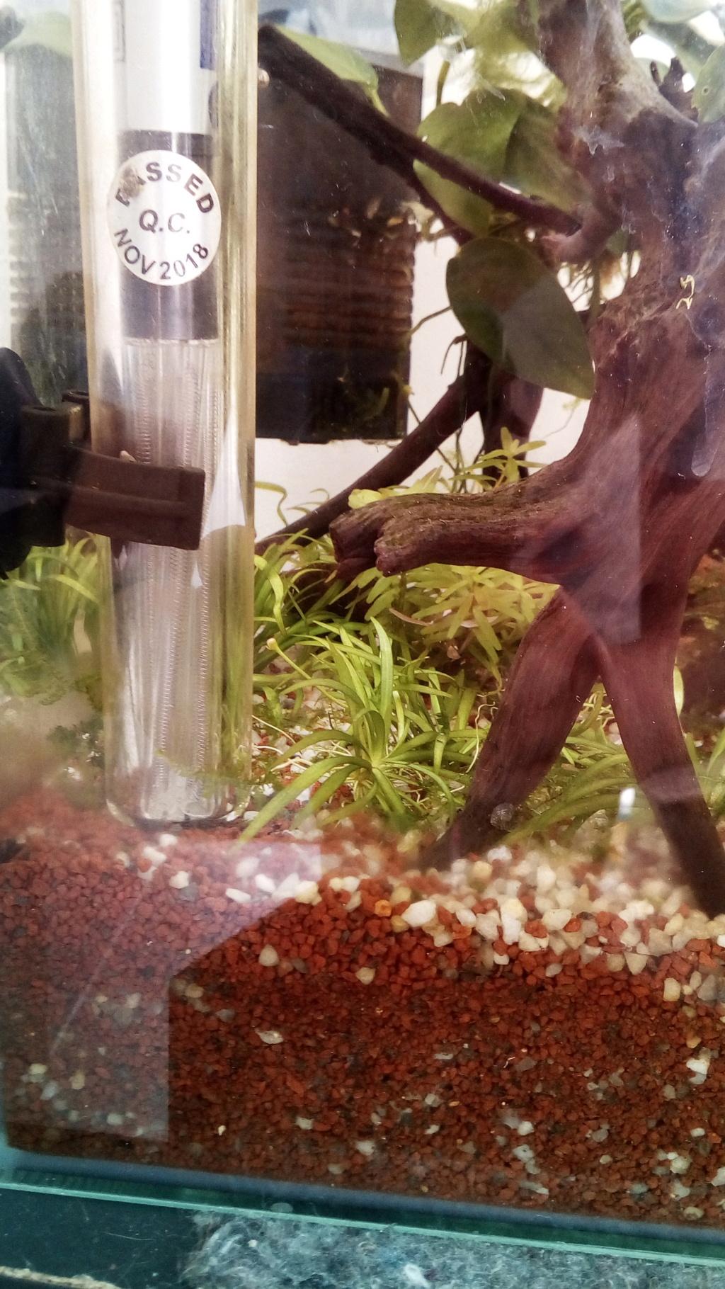 nano aquarium killi cap lopez - Page 4 Img_2312
