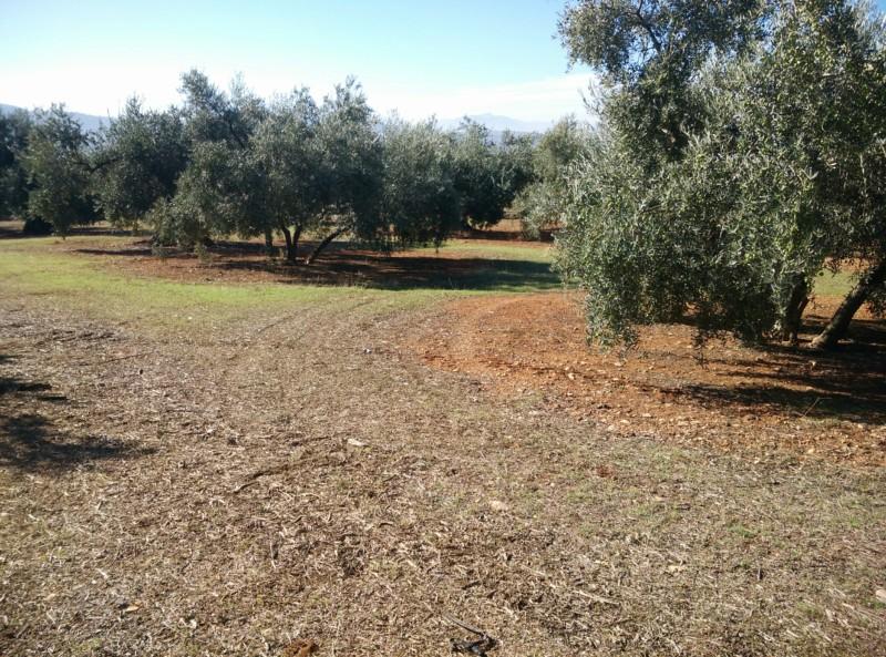 Suelo limoso (Granada) 20191110