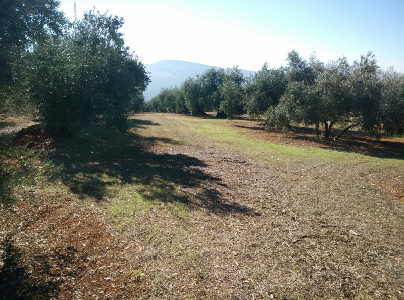 Suelo limoso (Granada) 20191111