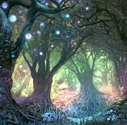 Forêt de Sycomores