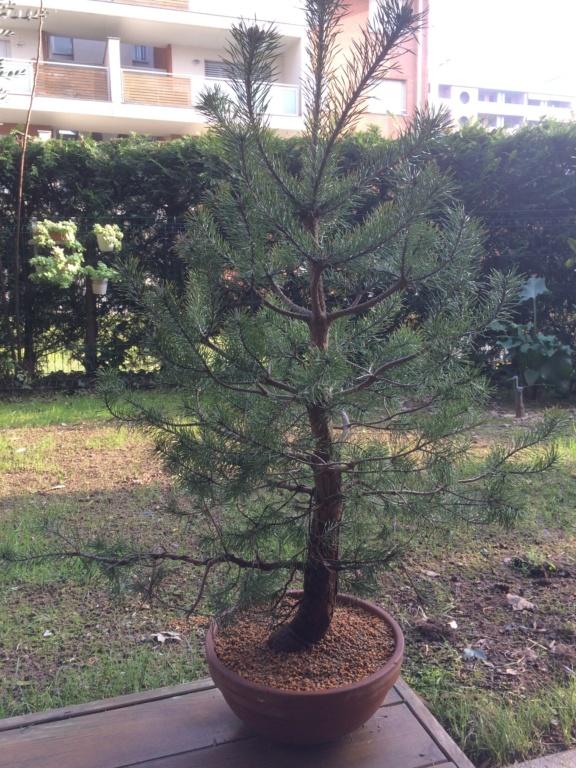 Pino colto in giardino  F1ef2710