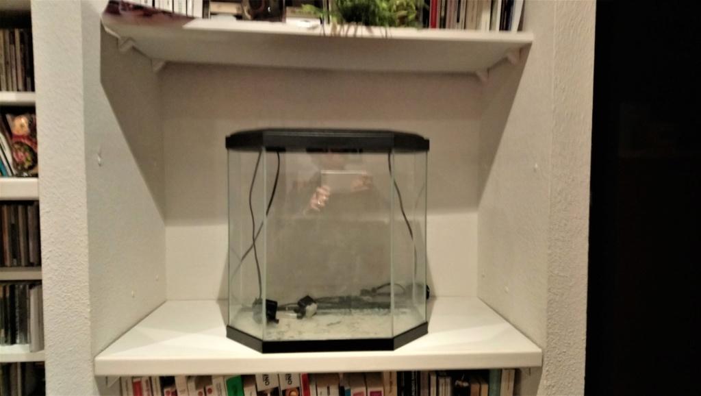 nouveau membre, mais ancien aquariophile Petit_10