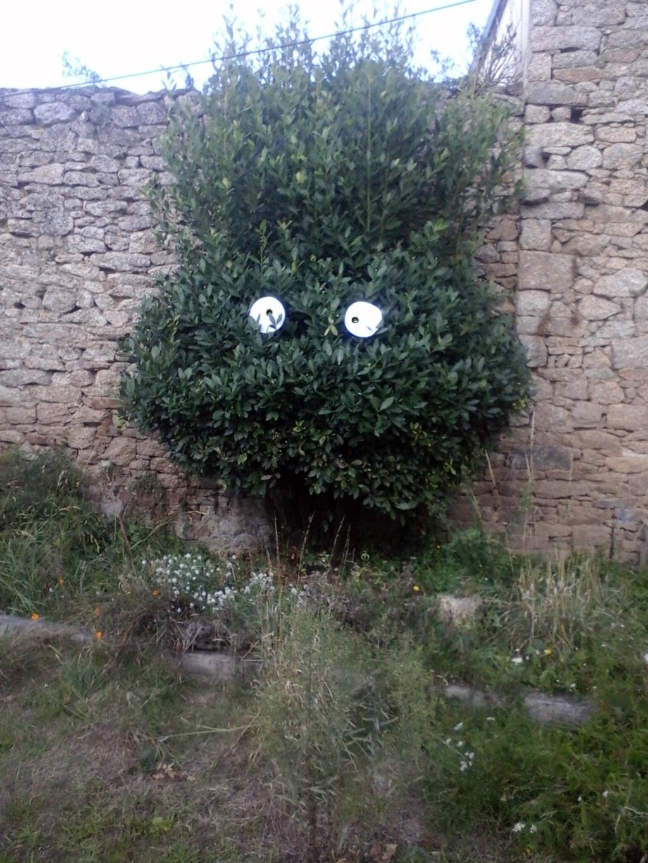 Dans mon jardin, on y touve ..... - Page 2 20200810