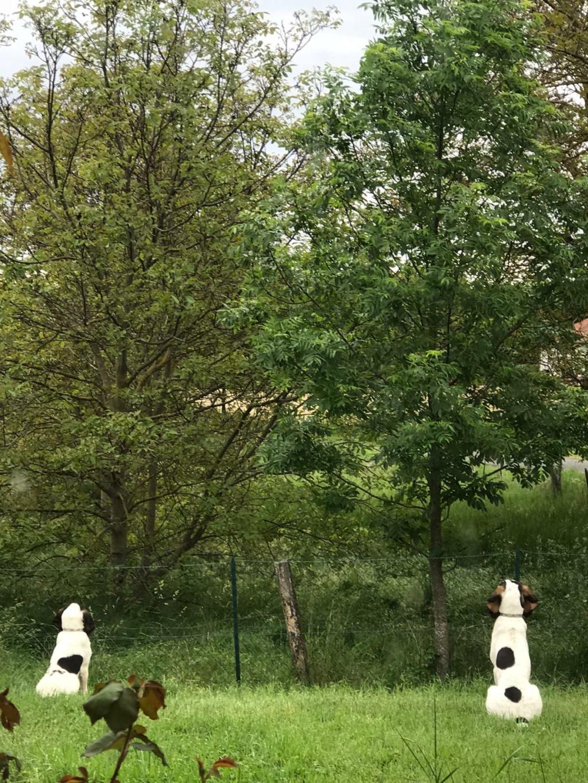NORVEGE (chienne croisée courant/gascon) Img-2020