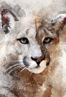 Puma Puma_k10