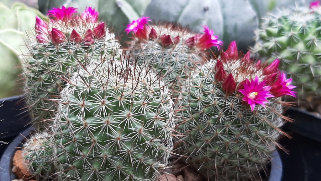 Cactus under carbonate. 20. (2020) . New Year's greetings. 20200511