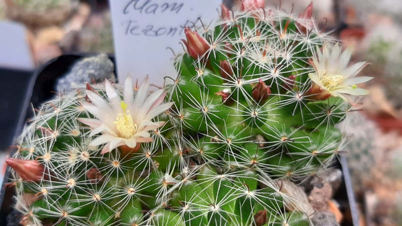 Cactus under carbonate. 20. (2020) . New Year's greetings. 20200614