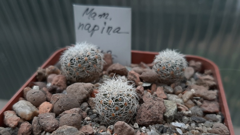 Cactus under carbonate. 20. (2020) . New Year's greetings. 20201111