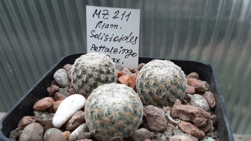 Cactus under carbonate. 20. (2020) . New Year's greetings. 20201112