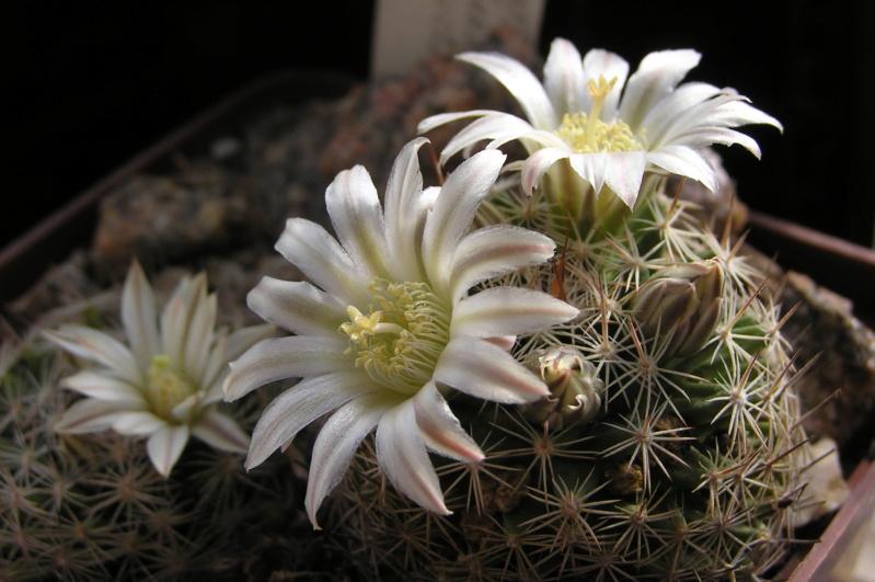 Cactus under carbonate. 20. (2020) . New Year's greetings. _m_coa10