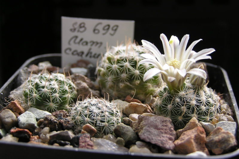 Cactus under carbonate. 20. (2020) . New Year's greetings. _m_coa12