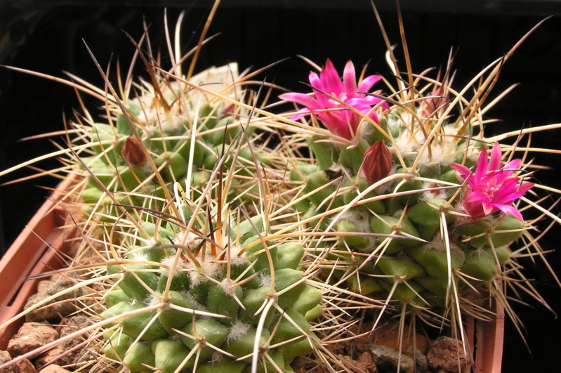 Cactus under carbonate. 20. (2020) . New Year's greetings. M_cent12