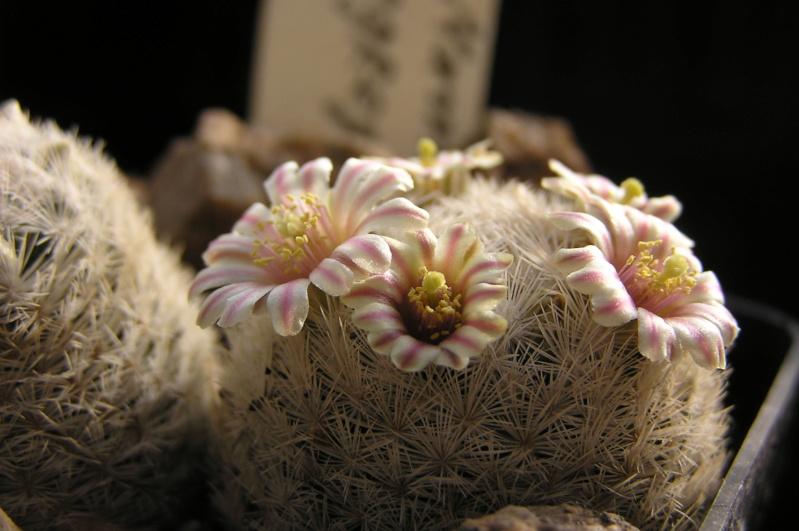 Cactus under carbonate. 20. (2020) . New Year's greetings. M_egre11
