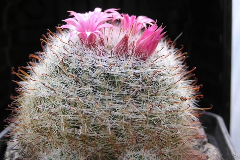 Cactus under carbonate. 20. (2020) . New Year's greetings. M_eryt10