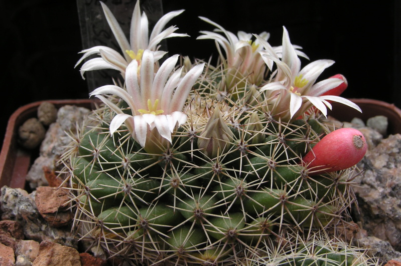 Cactus under carbonate. 20. (2020) . New Year's greetings. M_heyd10