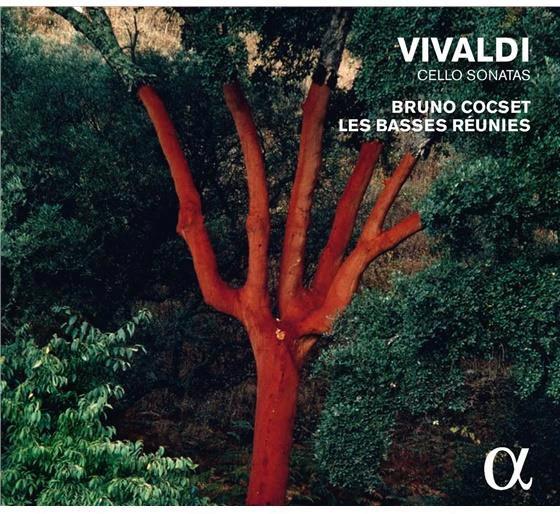 Bruno Cocset, explorateur des basses d'archet 02b_vi10