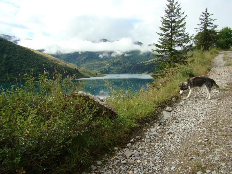 Puka et Chadka dans les Alpes 09_puk10