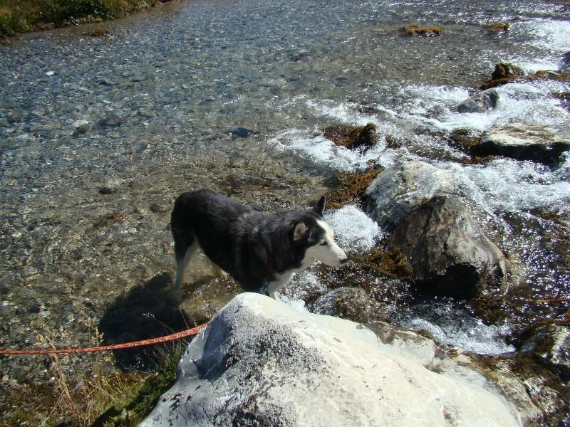Puka et Chadka dans les Alpes 23_puk10