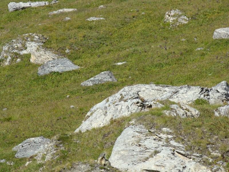 Puka et Chadka dans les Alpes 28_mar10