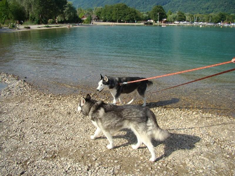 Puka et Chadka dans les Alpes 38_puk10
