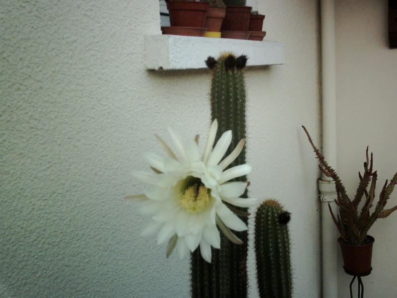 Première floraison depuis 1982... Crim0011