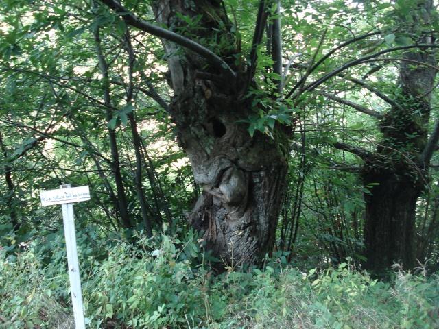Ardèche Nord Ardach28