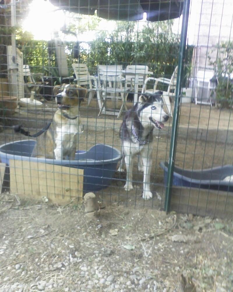 SOS SOS !!!Très Urgent pour une chienne de 14ans dans le Var Photo_10