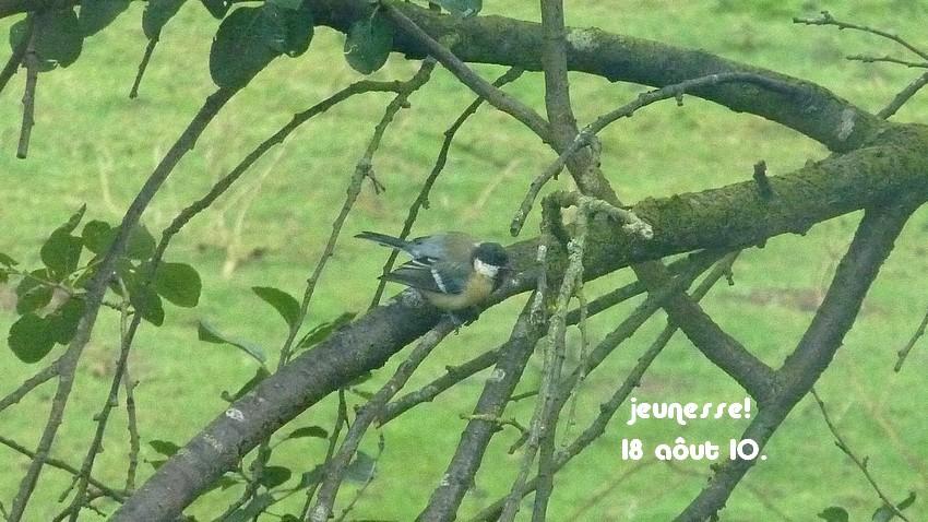 2010: dans mon jardin! oiseaux moutons poissons - Page 4 18_00810