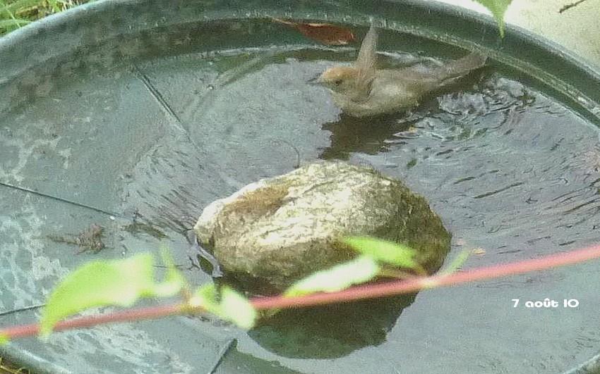 2010: dans mon jardin! oiseaux moutons poissons - Page 3 5_00111