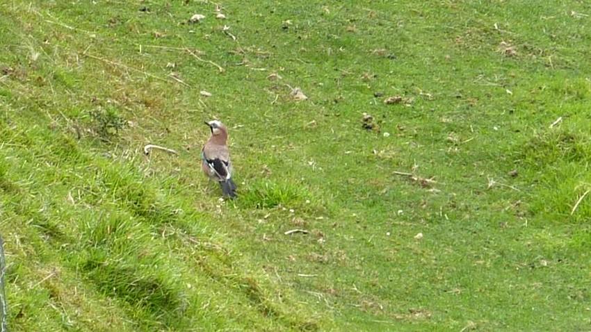 2010: dans mon jardin! oiseaux moutons poissons - Page 4 5_00710