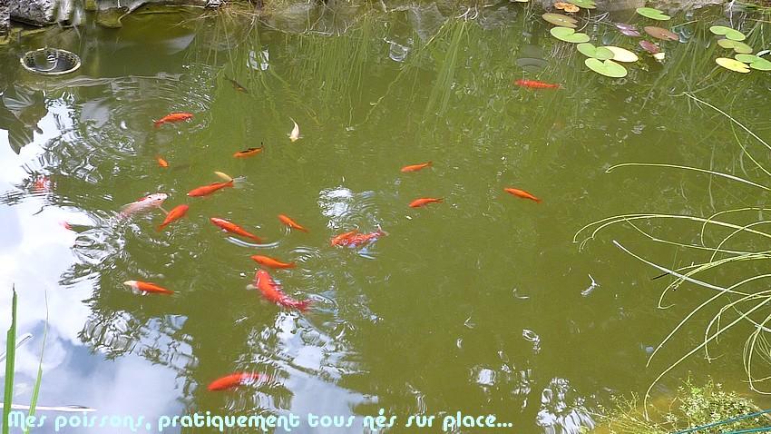 2010: dans mon jardin! oiseaux moutons poissons - Page 4 5_02210