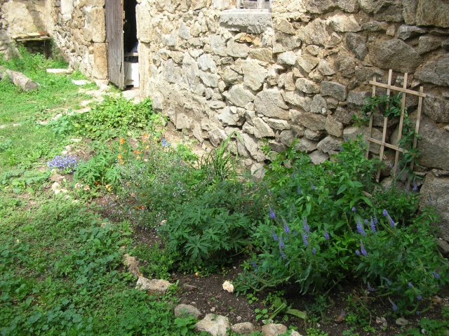 Jardin de Polgara - Page 2 Dscn8016
