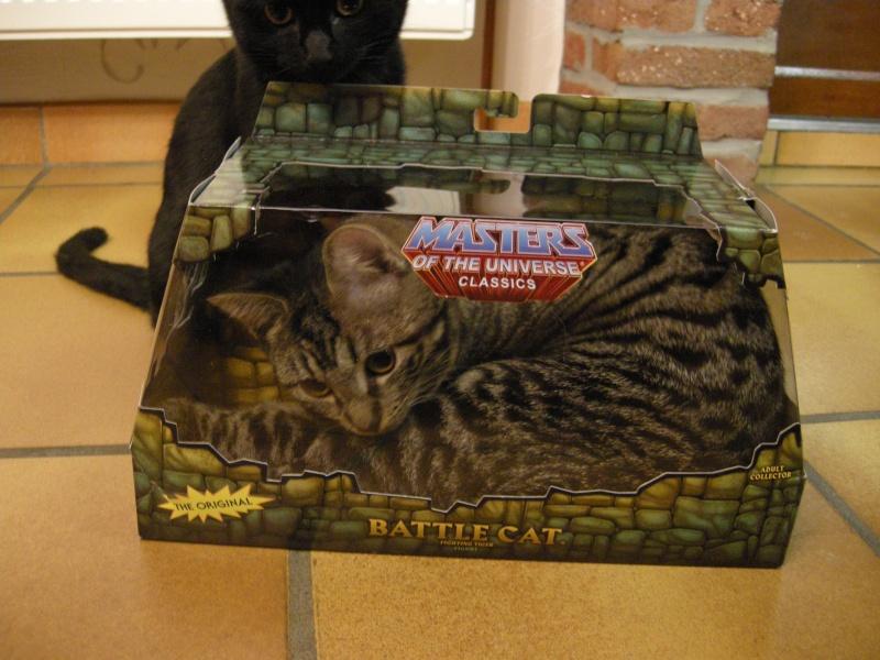 Battle Cat - topic officiel - Page 6 Dscn9710
