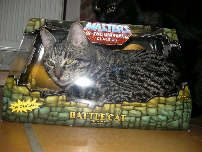 Battle Cat - topic officiel - Page 6 Dscn9711