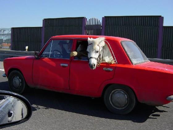 Les moyens de transport Cheval10