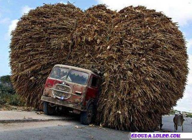 Les moyens de transport Normal13