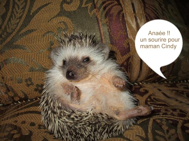Anaée ( 61/2 semaines ) ... Sassy est parti - Page 2 6_5_se13
