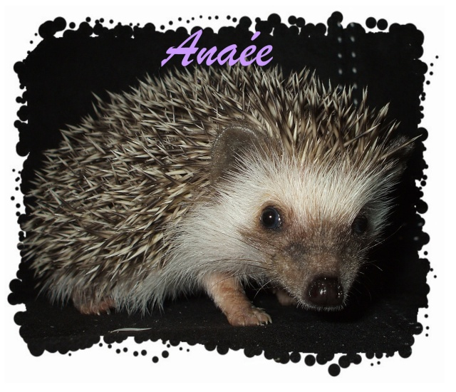 Anaée ( 61/2 semaines ) ... Sassy est parti - Page 2 6_sema10