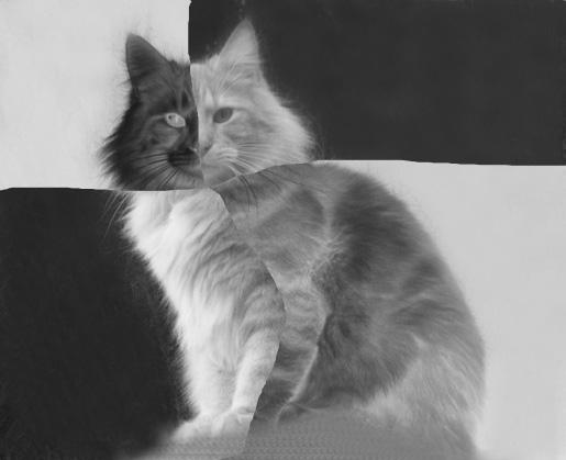 Saurez-vous reconnaître votre chat : jeu n° 18 Jeu_na11