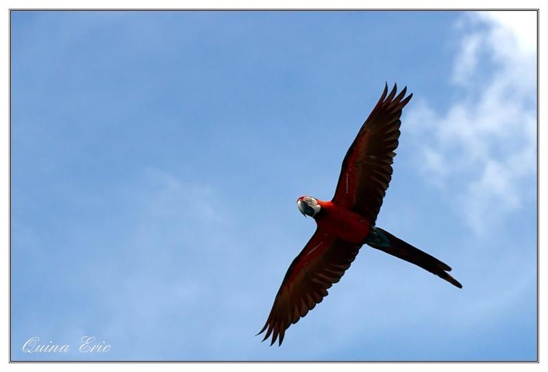 Oiseaux en vol - Page 2 Imgp4210