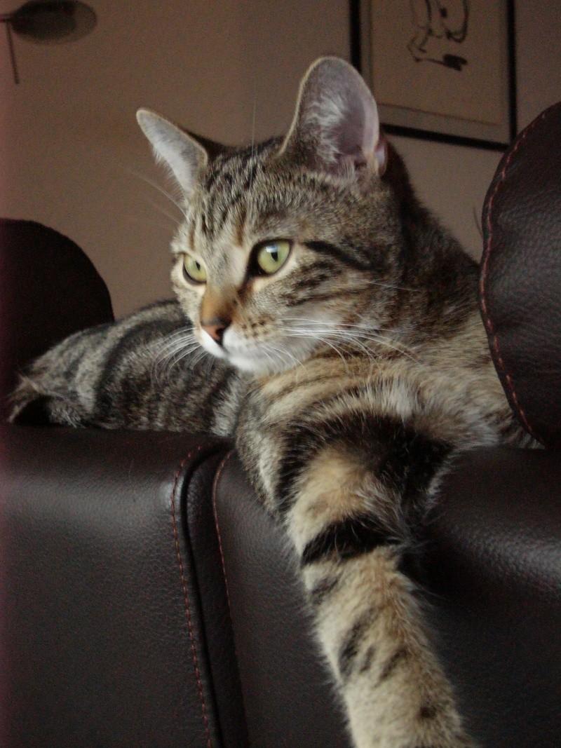 3 chatons (Flip, Grumeau, Chuppa) Chupa310