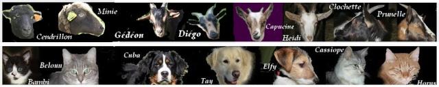 Petit chien noir, ST DIDIER LA FORET 03110 Bannia10