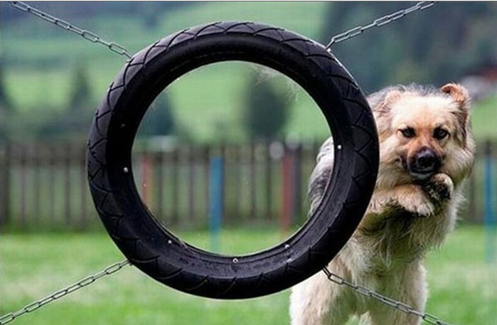 Humour canin Chien110