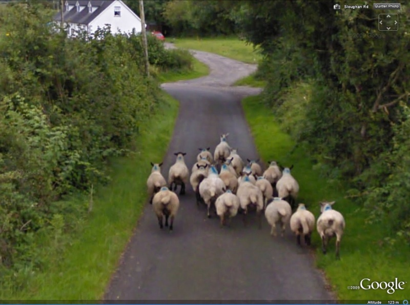 STREET VIEW : Les animaux - Page 3 Mouton10