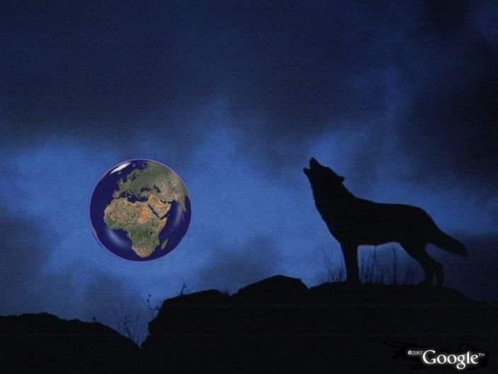 L'image truquée du premier trimestre 2008 Loup210