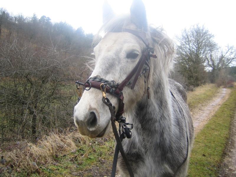 Mic, poney Connemara 11_et_10