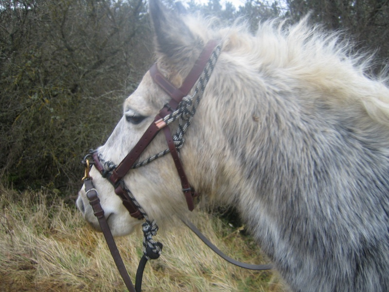 Mic, poney Connemara 11_et_11