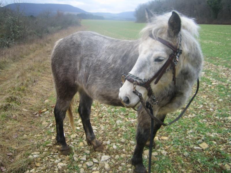 Mic, poney Connemara 11_et_12