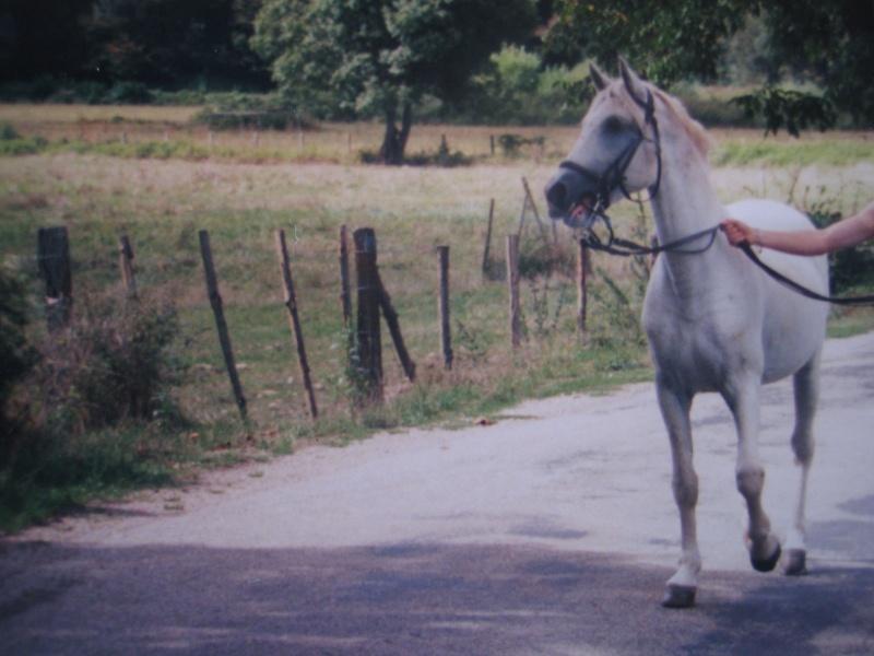Mon premier cheval Noel_211